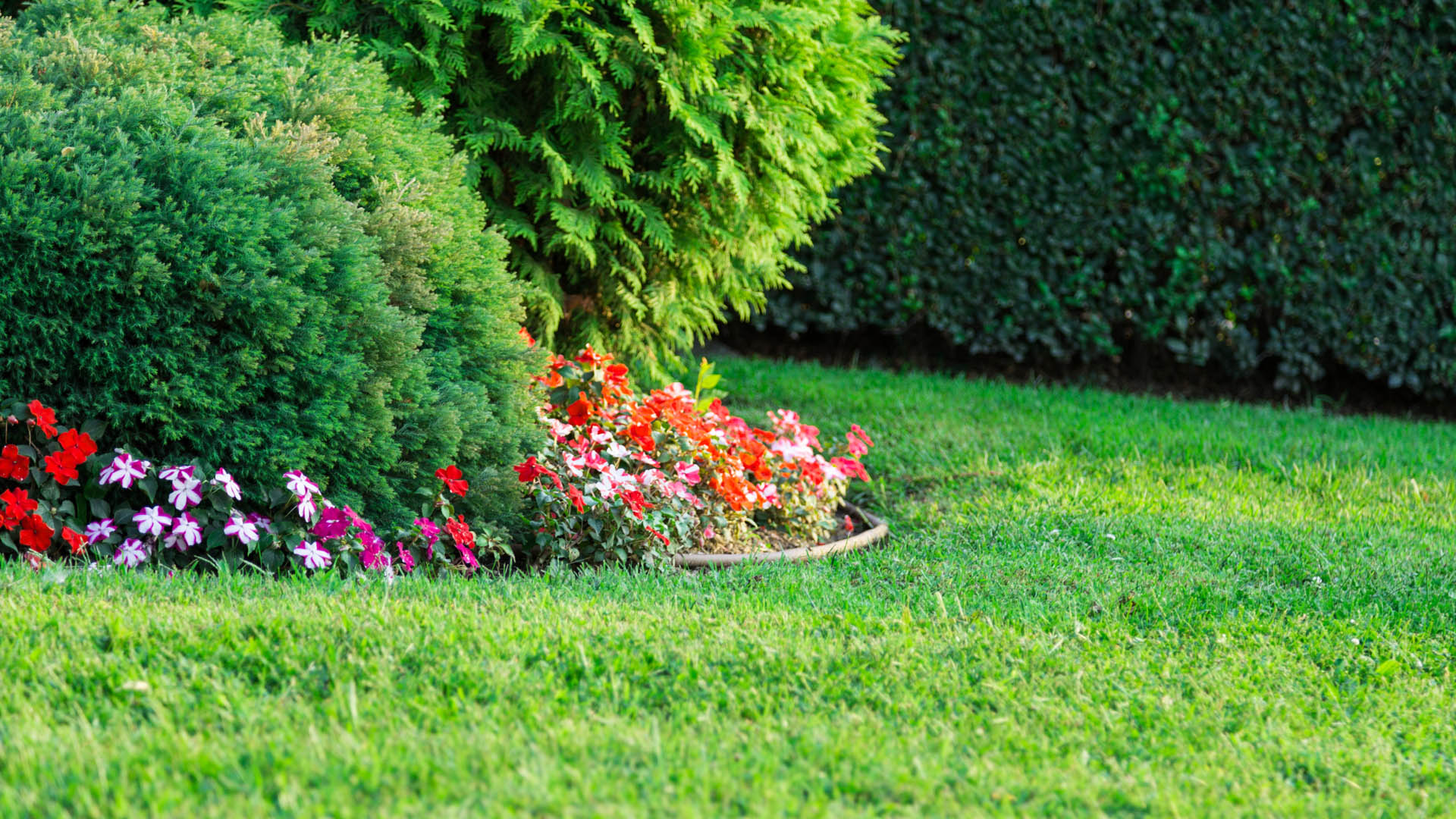 Green lawn and healthy landscaping with lawn fertilization treatment.