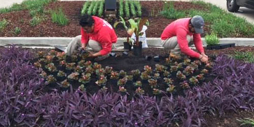 Ambiance Landscape team installing new commercial landscaping design.