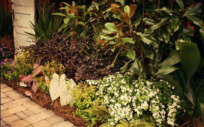 Landscaping bed maintained by Ambiance Landscape.